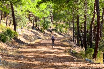 A-walk-through-the-woods-2