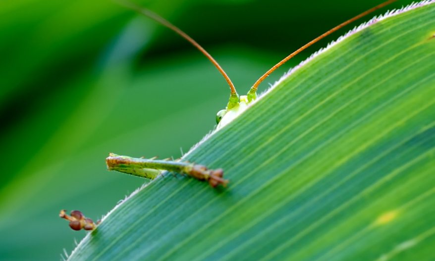 green-insect-behind-green-leaf-65642.jpg