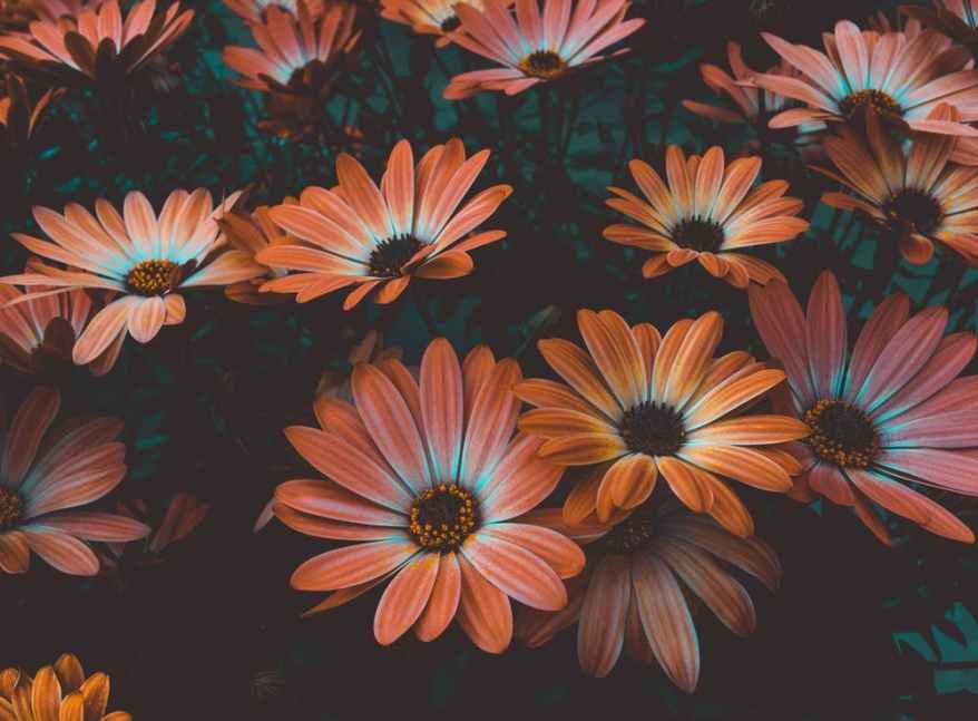pexels-photo-1477166