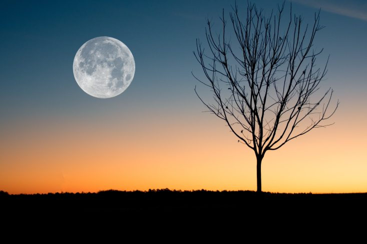 illustration-of-moon-showing-during-sunset-884788
